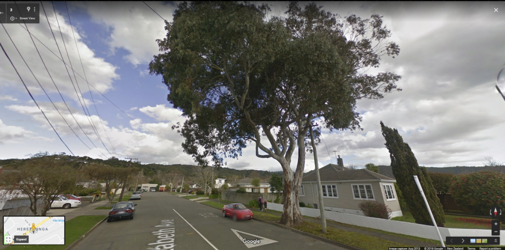 Google maps of the Gum tree on Elizabeth Avenue