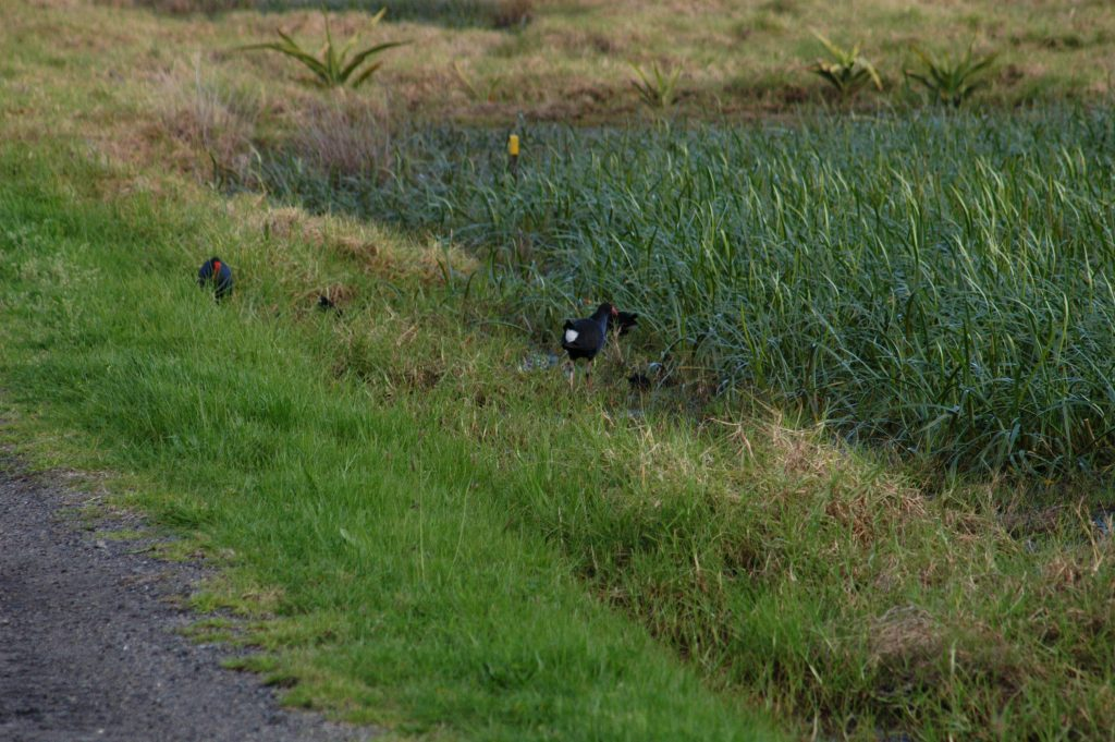 Roadside ditch or swale with birds